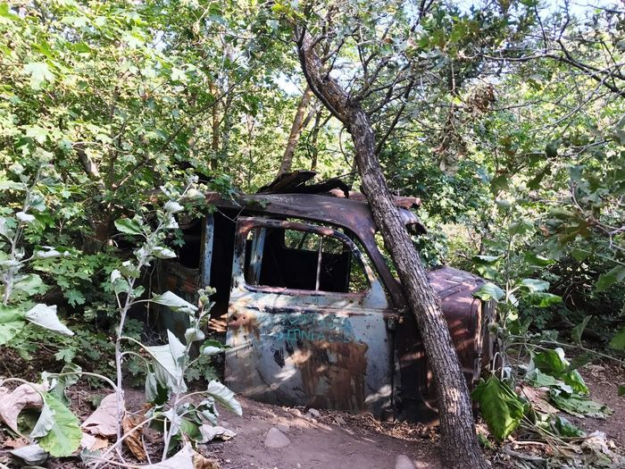 Stranded car Abandoned Damaged Obsolete Tree No People Destruction Day Plant Growth Leaf Branch Outdoors Nature Birdsong Trail Utah