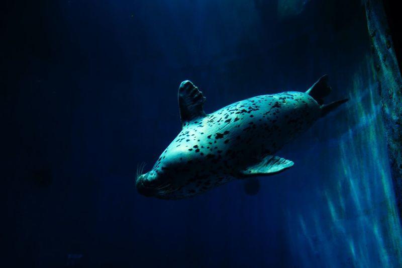 Sea Lion Swimming In Sea