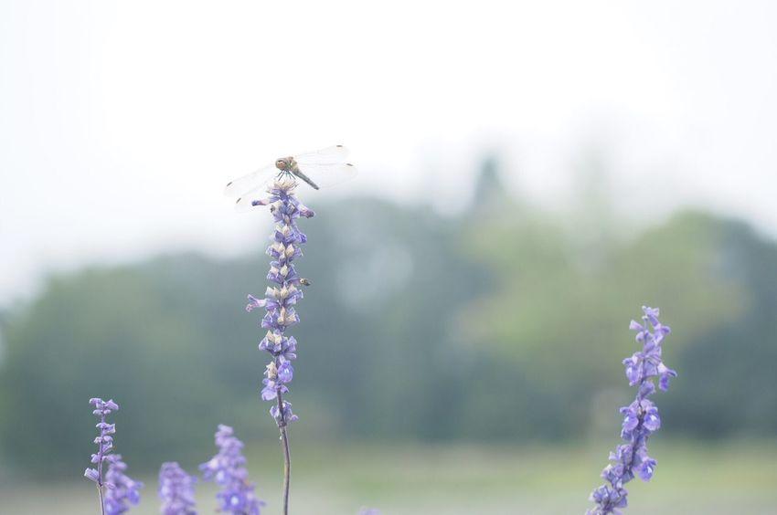 メナード青山リゾート Flower Animal Themes One Animal Beauty In Nature Nature EyeEm Best Shots EyeEm Nature Lover