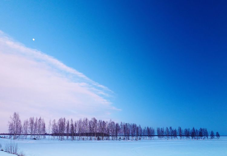 Blue Sky Bluepurple Cloud Forest Horizon Lake Landscape Moon Woods The Great Outdoors - 2017 EyeEm Awards Shades Of Winter An Eye For Travel