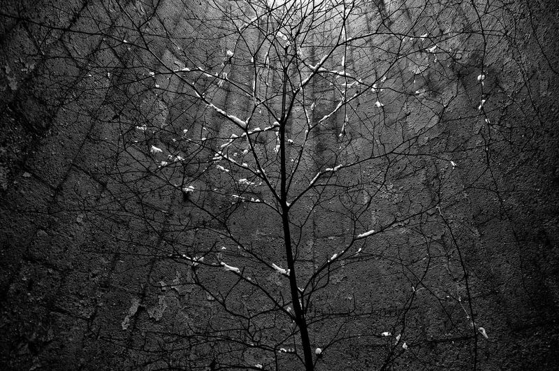 Bare tree against sky at night