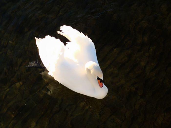 UnderSea Bird