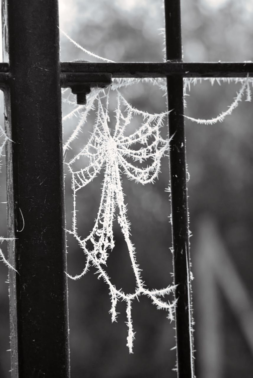 CLOSE-UP OF SNOW COVERED SPIDER WEB ON TREE