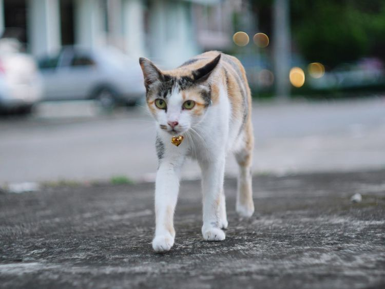 Pets Animal Cat Beauty In Nature Nature Animals In The Wild Large Group Of Animals Domestic Animals One Animal Theatrical Performance Puppy Cute Outdoors Animal Themes Domestic Cat Looking At Camera Playing Happiness No People Ear Portrait Summer Day Mammal Pet Portraits