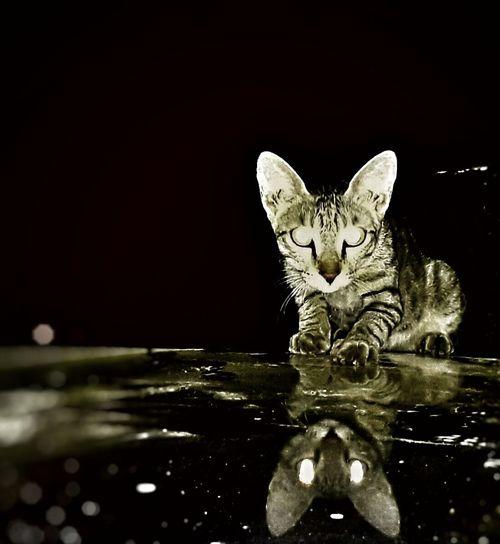 Domestic Cat Animal Themes Black Background EyeEmNewHere