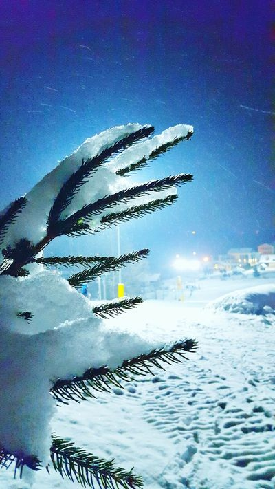 ski ❄ Snow Friends Ski Tree Cold Nature Snowy Brrrr! Snowboarding Galaxys6 Galaxys6photography Mobilephotography Smartphonephotography Amateurphotography