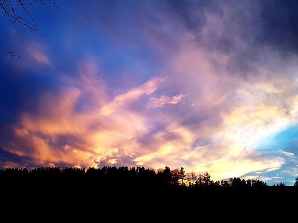 Tree Sunset Multi Colored Silhouette Blue Dramatic Sky Sky Cloud - Sky Landscape