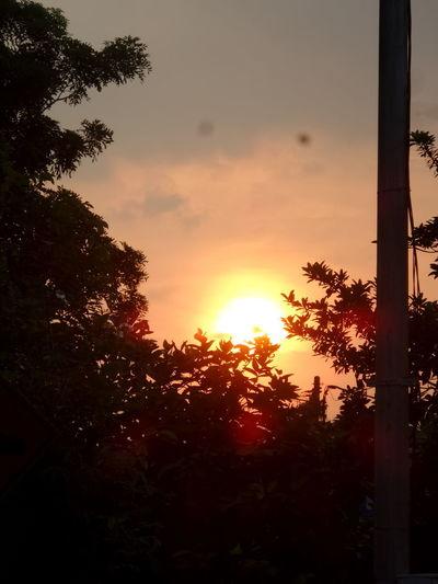 sun Sunset Tree Sun Sky Close-up Cloud - Sky
