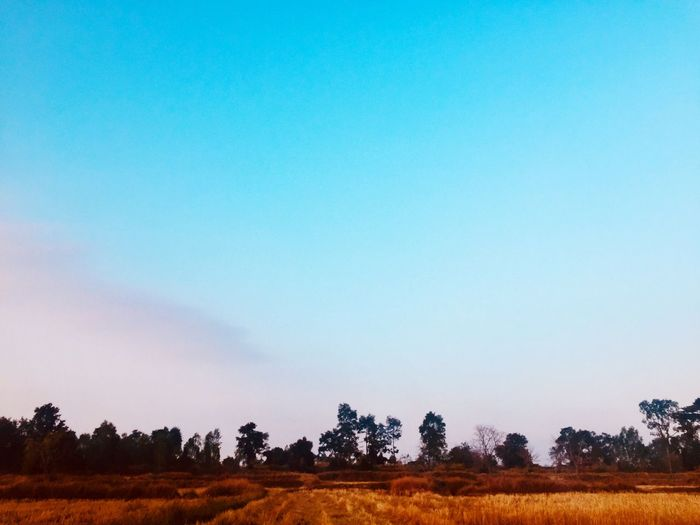 Beautiful Sunset, Sunlight, Sunrise and treescape in the morning. Field Landscape Nature Tranquil Scene Beauty In Nature Tranquility Tree Blue Scenics Agriculture Rural Scene No People Outdoors Day Growth Clear Sky Sky
