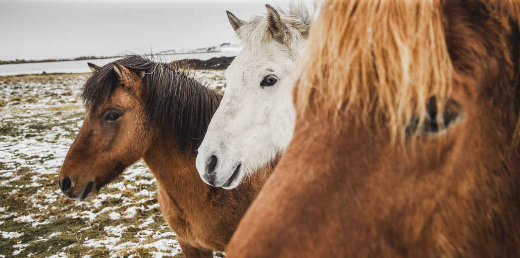 Close-up of horses on land