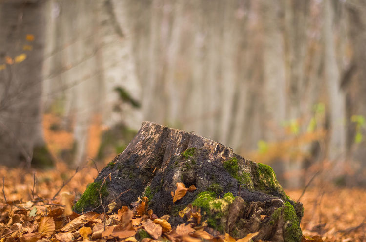 Exploring the little mountain town of Krushevo in Macedonia Beauty In Nature Close-up Day Focus On Foreground Forest Leaf Nature No People Outdoors Tree Tree Stump Tree Trunk