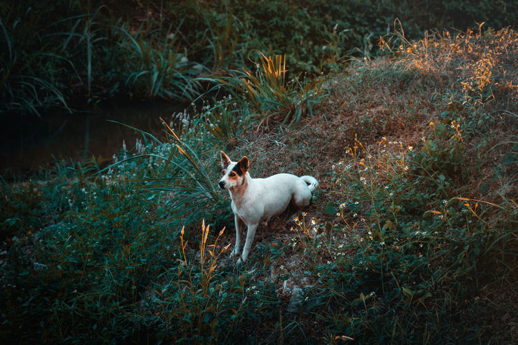 Dog in a Park One Animal Domestic Mammal Domestic Animals Plant Pets Nature Vertebrate No People Animal Wildlife Land Animals In The Wild Day Standing Full Length Canine Dog