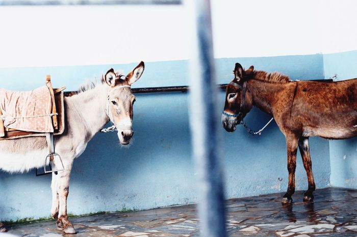 Animal Themes Mammal Domestic Animals Day No People Outdoors Rhodes Greece Donkey