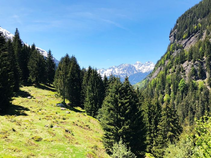 Maderanertal, Schweiz Switzerland Schweiz Maderanertal Alpen Alps Wood Plant Tree Sky Growth Nature Beauty In Nature Day No People Tranquility Sunlight Green Color Scenics - Nature Outdoors Land Tranquil Scene Low Angle View Blue Field