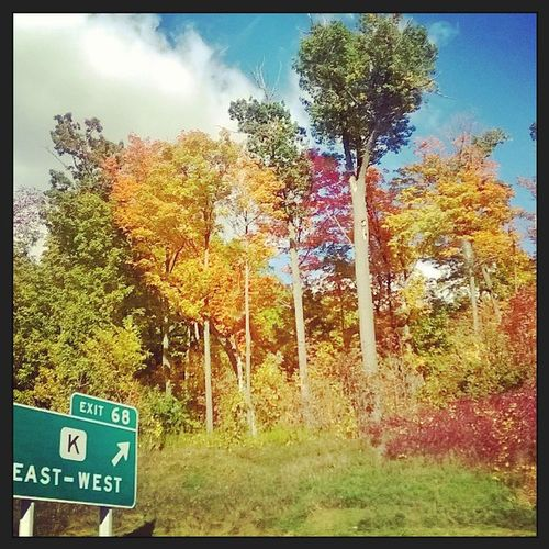 College is cool but my hometown has prettier trees 🍂🌾🍁 Home Homewardbound Fall Autumn Nature Professionalphotographer Basically Dailyaesthetic