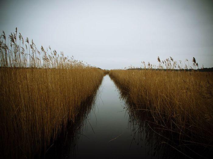Narrow canal along trees