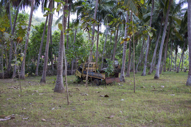 Bali Car Forest Lost Nature No People Tranquility Tree