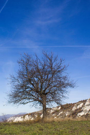 Bare tree on field against blue sky
