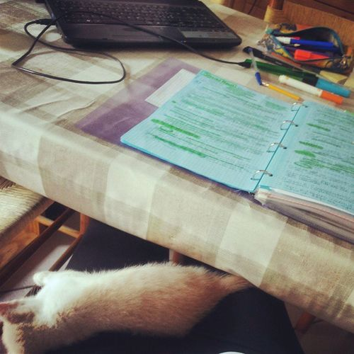 Io studio e tu dormi sulle mie gambe.. è così che mi aiuti?!? Littlemonster Helpme Iwannasleep