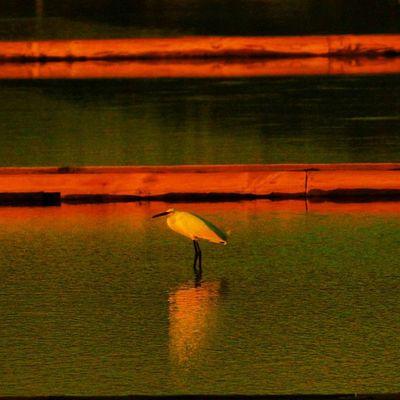 #figueira #figueiradafoz #clouds #iphone5 #iphonesia #iphoneonly #iphoneonly #iphonephotography #instagood #instagram #instalove #instamood #instadaily #instafamous #instagramhub #statigram #statigramhub #photography #photooftheday #photography #photoofth Instagood Portugal_em_fotos Instafamous Clouds Statigram Sun Instagramhub Sunset Instadaily Photography Pictureoftheday Iphoneonly Instalove Salinas Figueira Photooftheday Figueiradafoz Iphonesia Portugaligers Instagram Igersportugal IPhone5 Portugaldenorteasul Instamood Morraceira P3top Iphonephotography Igers Statigramhub Igers_figueira