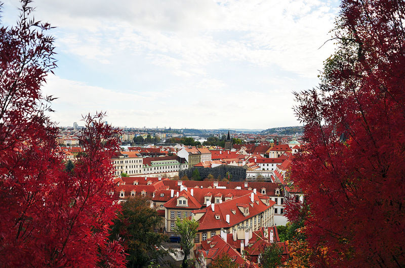 Buildings with trees in background
