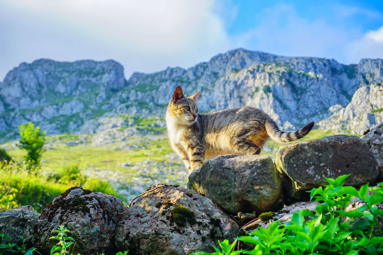 Cat sitting on rock