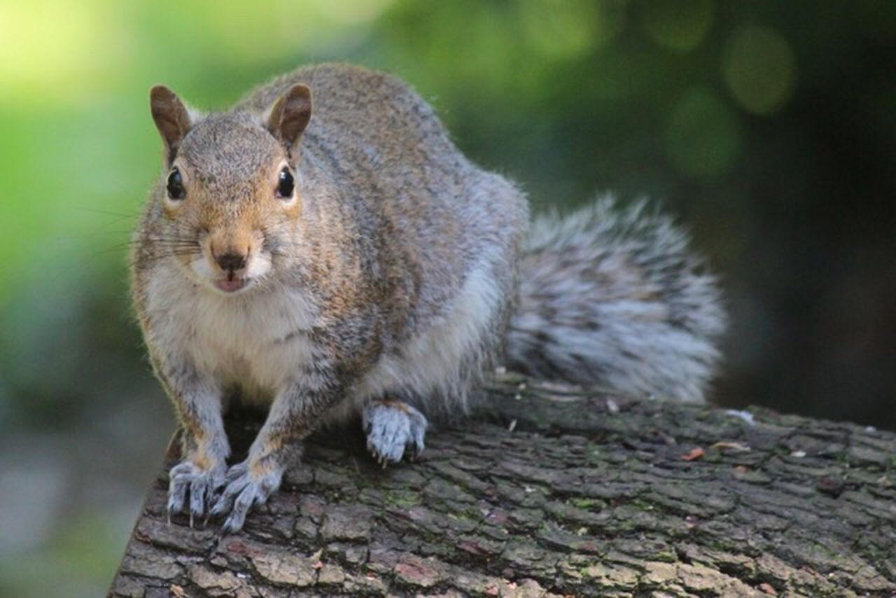 animal wildlife, one animal, animals in the wild, outdoors, no people, animal themes, day, looking at camera, nature, mammal, portrait, close-up