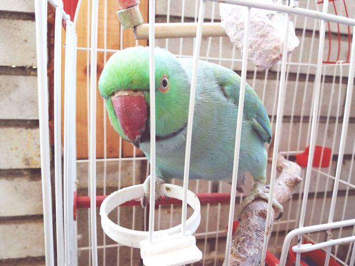 EyeEm Selects Parrot Parrot Lovers Parrotsofinstagram Parrots On A Tree Papagallo Aleksander Aleks Green Greencolour