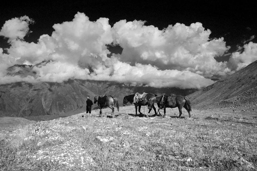 Black & White Great Caucasus Infrared Beauty In Nature Cloud - Sky Day Domestic Animals Grass Grazing Horse Infrared Photo Infrared Photography Landscape Large Group Of Animals Livestock Mammal Mountain Nature Outdoors People Sky