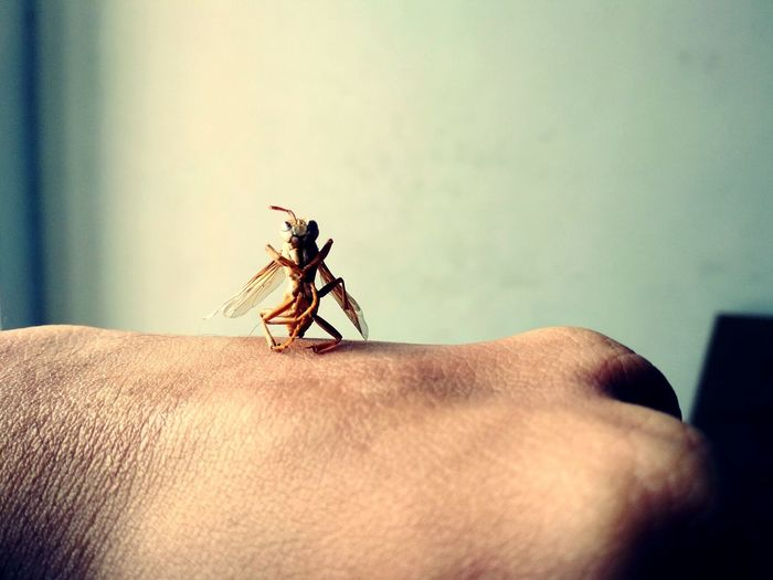 Insect Animal Wildlife Close-up Human Hand One Animal Human Body Part One Person Day Animal Themes