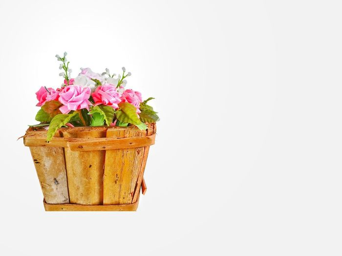 Close-up of pink flower pot against white background