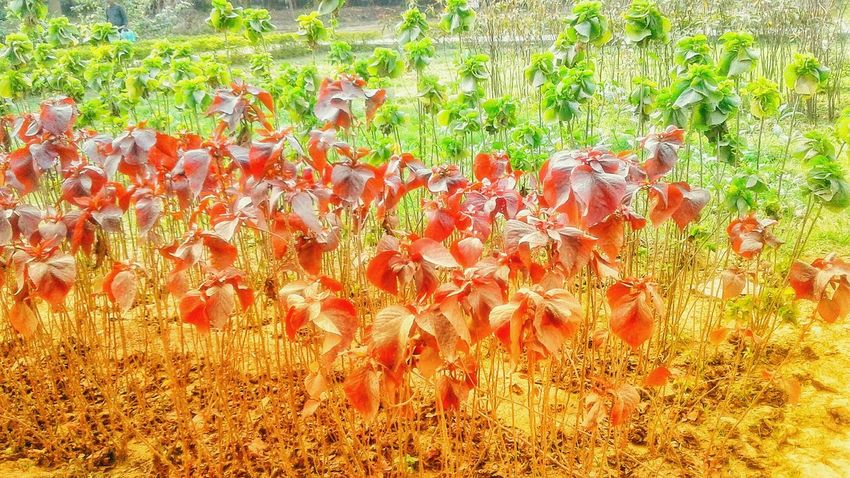 Nature Represent India Agriculture Freshness