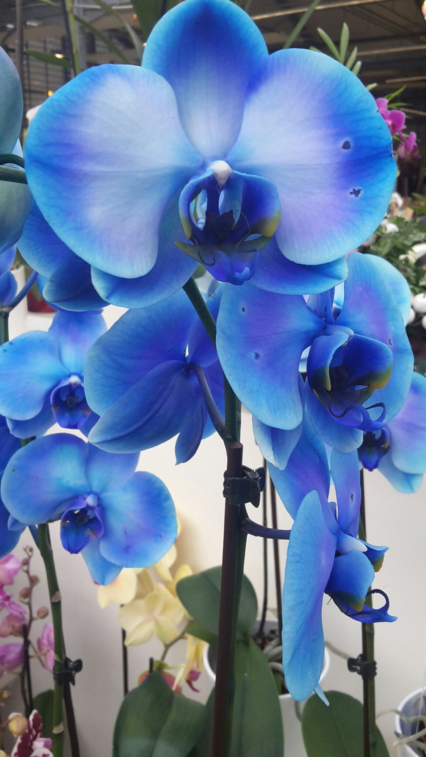 flower, petal, purple, flower head, fragility, freshness, blue, growth, beauty in nature, orchid, blooming, close-up, plant, nature, focus on foreground, in bloom, day, sunlight, outdoors, no people