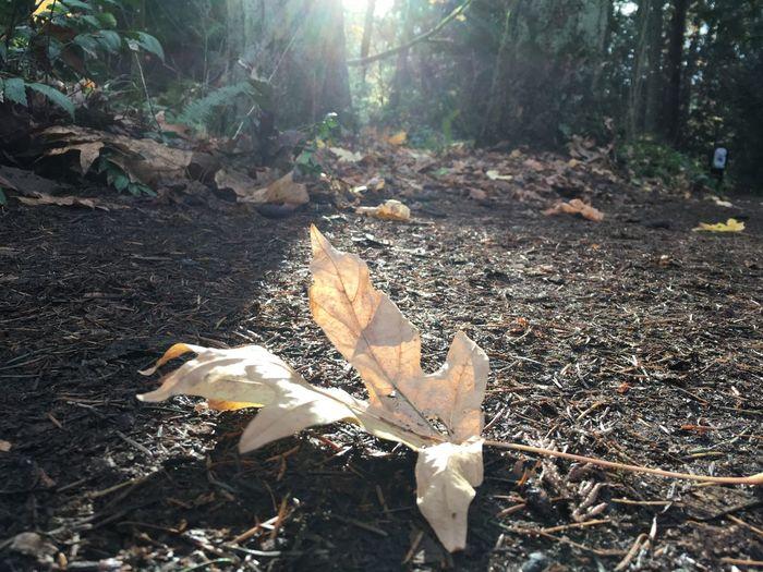 Hike. Leaf