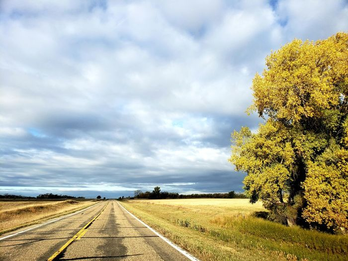 Tree Rural Scene Road Sky Landscape Cloud - Sky Empty Road Road Marking Mountain Road The Way Forward Asphalt Dividing Line Treelined vanishing point Diminishing Perspective Cumulus Cloud Country Road Straight Plowed Field Double Yellow Line Tire Track