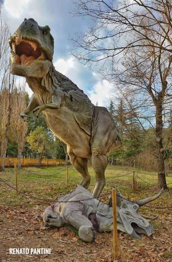 Turannosaurus rex e Triceratops horridus Tyrannosaurus Tyrannosaurusrex Tyrannosaurus Rex Triceratops Tirannosauro Triceratopo Dinosauro Dinosauri Dinosaur Dinosaurs DinosaursAroundTheWorld Replicas Exhibition Chianciano Chianciano Terme