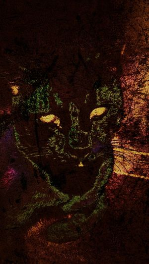 Neon Cat No People Indoors  Night Neon Neon Lights Cat CatEye Feline Close-up Animal Photography Animal Eye