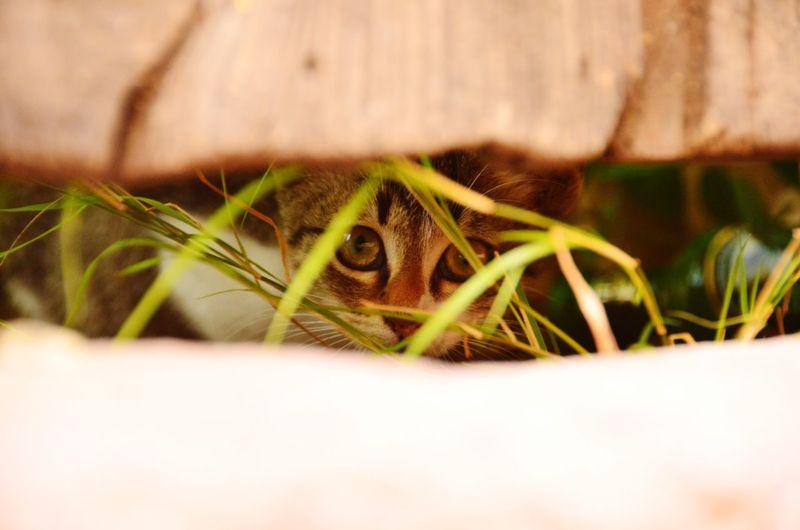 Close-up of cat seen through plank