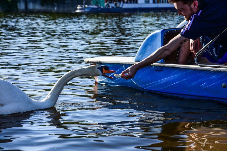 Animal Wildlife Day Lake Lifestyles Men Nature Nautical Vessel One Animal Outdoors People Real People Swan Swan In A Lake Swimming Transportation Vertebrate Water Waterfront