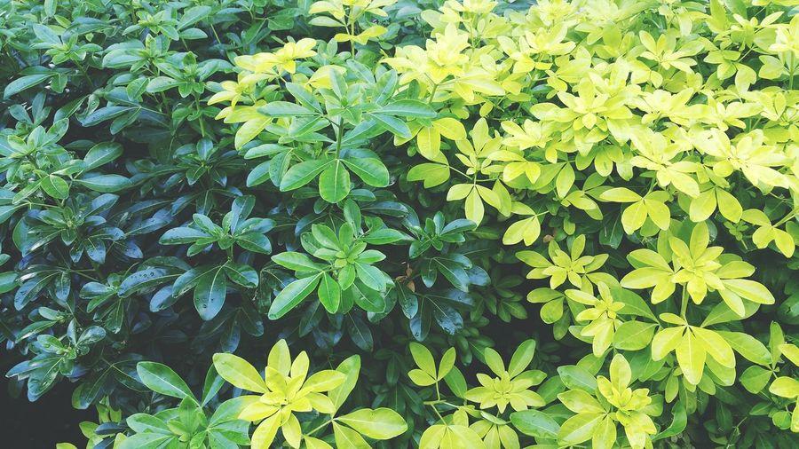 TakeoverContrast Color Palette Green Color Palette Color Palette By MOO
