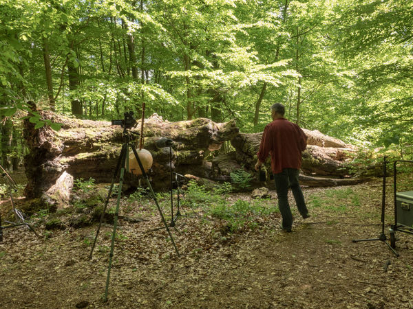 Sababurg-Project with Musician Klaus Latza Adult Adults Only Ancient Woodland Beauty In Decay Beauty In Nature Day Fallen Tree Forest Full Length Men Nature One Man Only One Person Only Men Outdoors People Real People Standing Tree Tree Trunk Video Equipment Videoshooting WoodLand Working Hard