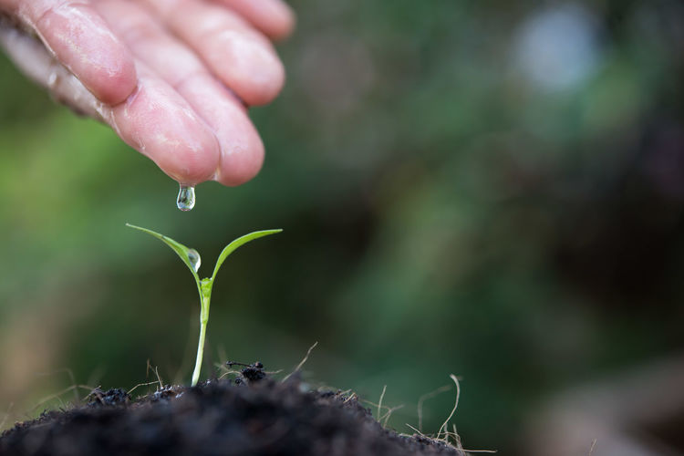 Close-Up Of Person Watering Seedling