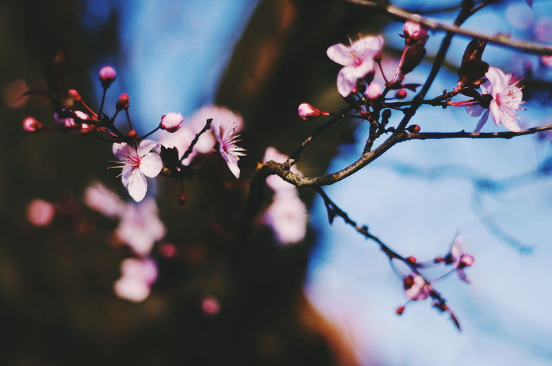 Shots found on my Pentax Branch Tree Flower No People Nature Springtime Pink Color Beauty In Nature Outdoors Close-up Day Fragility Freshness Sky The Week On EyeEm