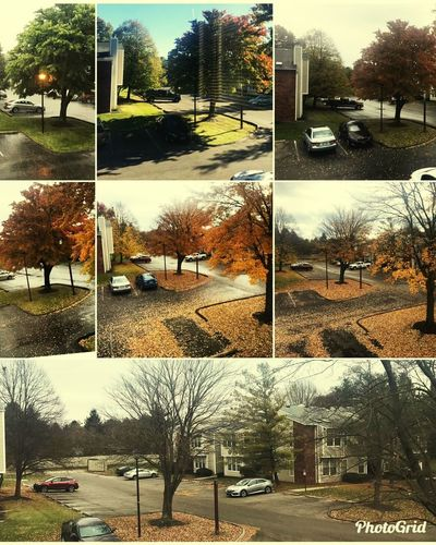 From Above  A To Z Autumn Autumn colors Autumn Leaves Autumn🍁🍁🍁 Ohio Ohio, USA Ohio State Colors Clorful Life Tree Trees Treescollection Tree_collection  Tree City Car Sky Building Exterior Multiple Image Montage Image Montage