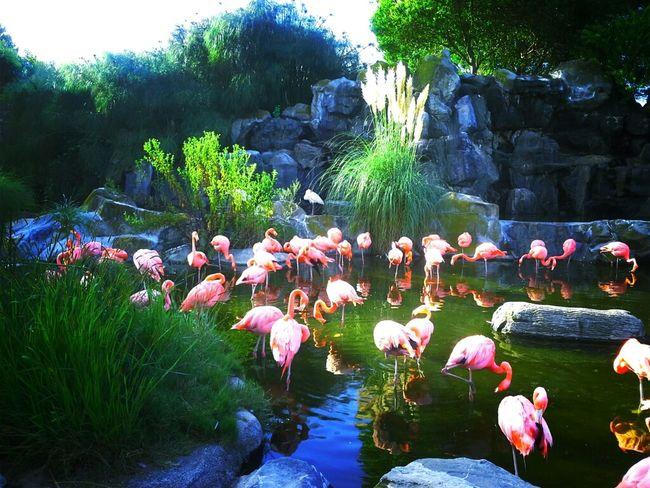 Enjoying Life Flamingo Buenos Momentos Buenos Aires