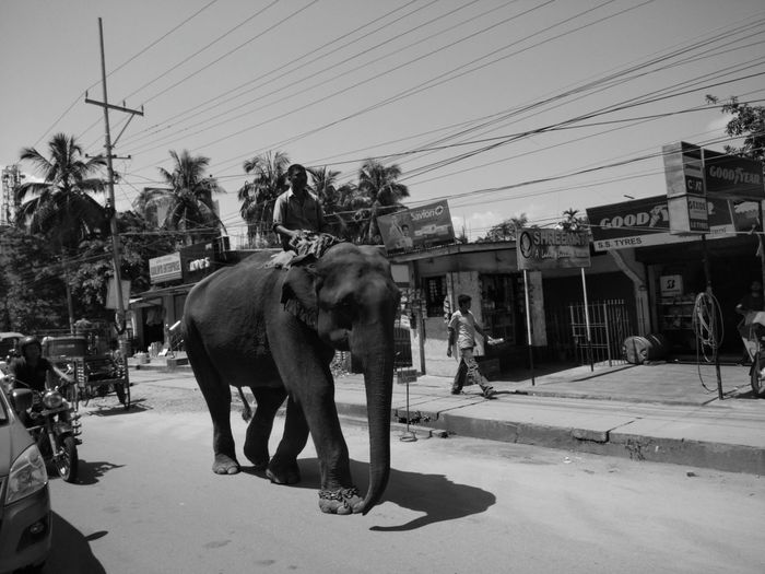 What yous think about the elephant? EyeEmNewHere EyeEm Selects