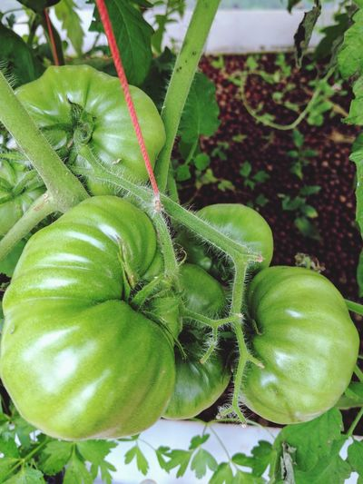 Aquaponics Healthy Eating Growth Fruit Food Nature Beauty In Nature