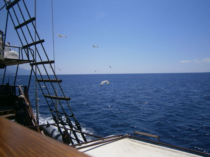 Cropped image of boat sailing in sea by birds flying against clear blue sky