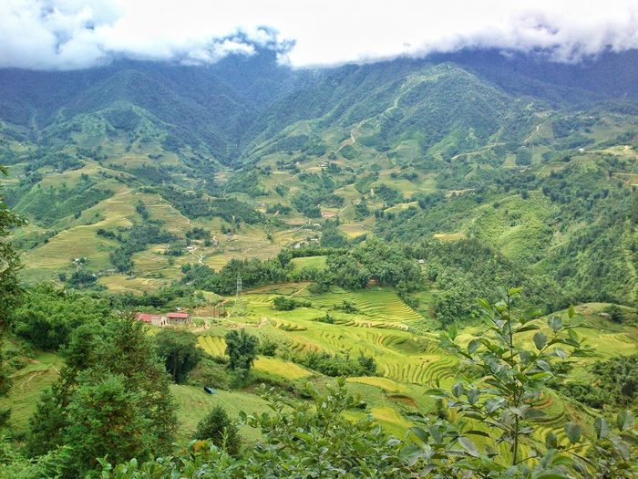 Colour Of Life Vietnam Sapa Backpacking Southeastasia ASIA Travel Perspectives On Nature