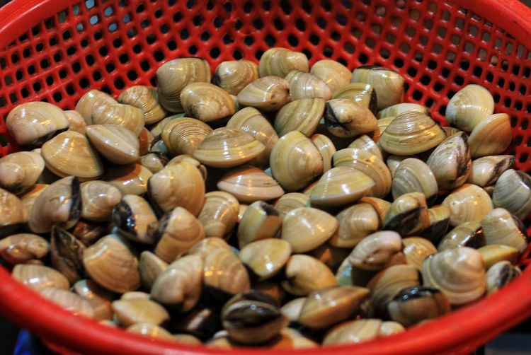 High angle view of mussels in container